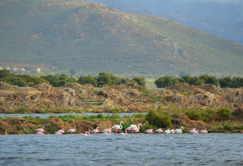 Worcester flamingos