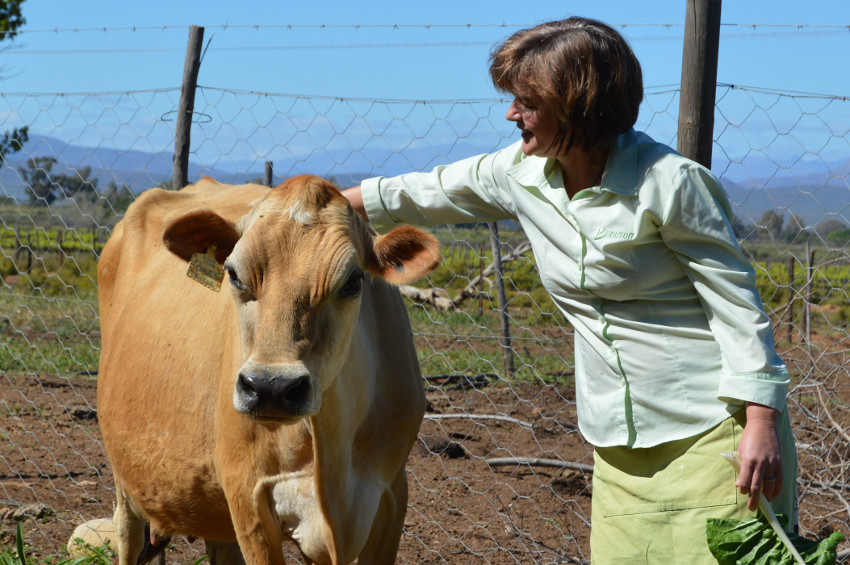 Jacolien and Blommetjie, a special member of the herd on the farm.